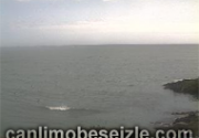 Cork live webcam watch canli izle