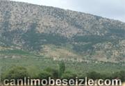 Gürpınar Belediyesi Canli mobese izle