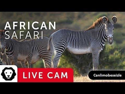 Safari Canlı Yayın İzle