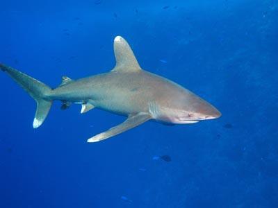 Köpek Balığı Canlı izle live