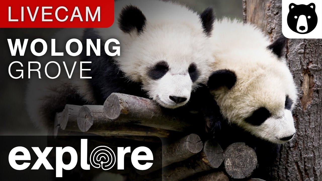 Panda Canlı izle