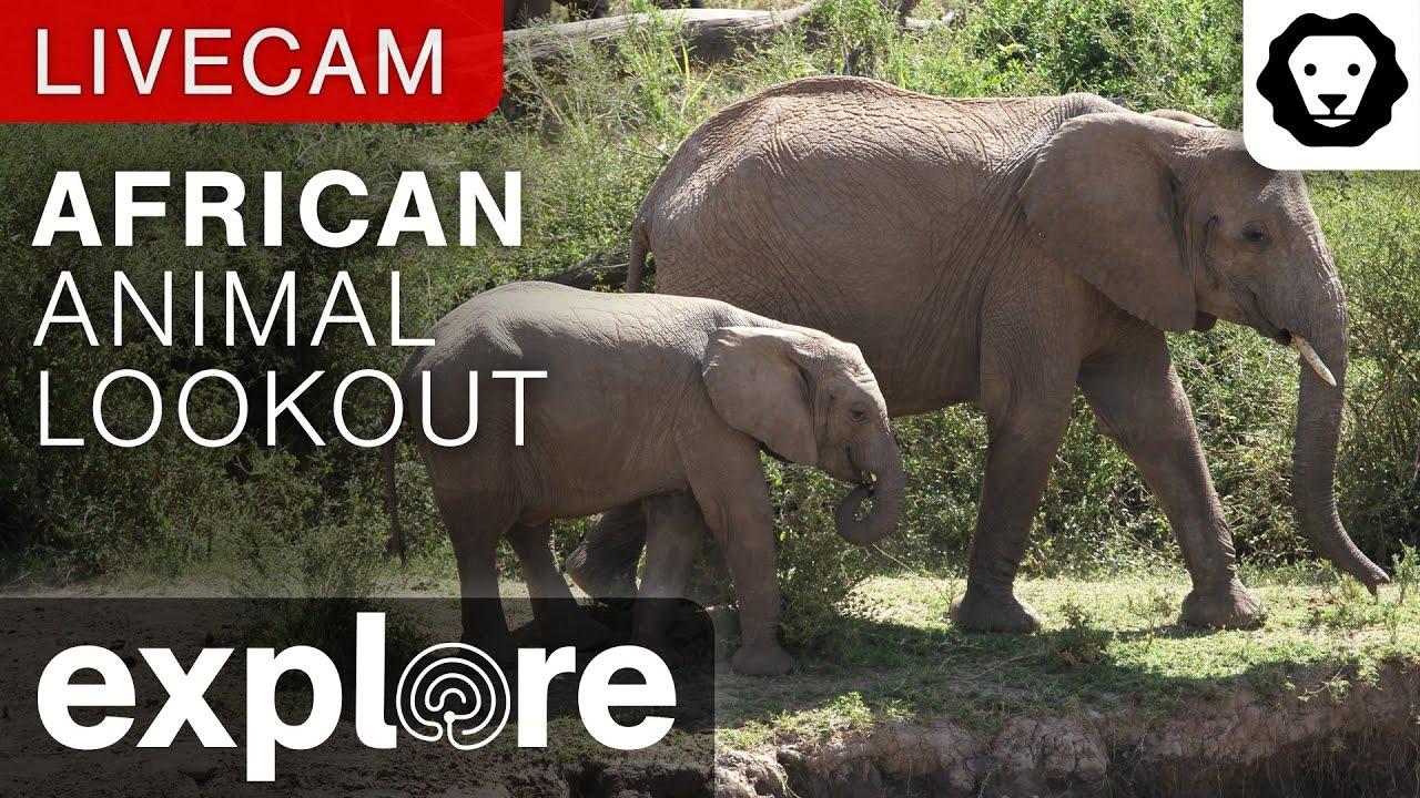 Afrika Hayvan Gözetleme Canlı izle