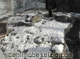Alaska Hayvanat Bahçesi Kutup Ayılar canli izle