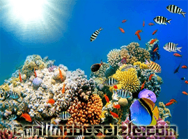 Cayman Adaları Sualtı canli izle