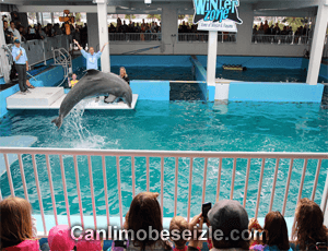 Clearwater Marine Aquarium canli izle