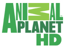 Animal Planet HD Tv Frekansı