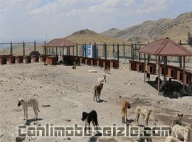 Kayseri Köpek Barınma Evi canli izle