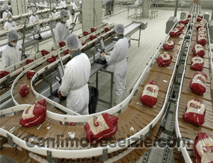 Lezita Fabrika Canli izle